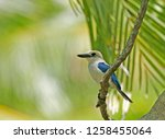 niau kingfisher  todiramphus...   Shutterstock . vector #1258455064