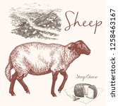 sheep  cheese and rural... | Shutterstock .eps vector #1258463167