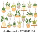 plants in hanging pots.... | Shutterstock .eps vector #1258481134
