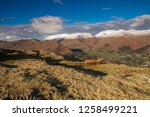 helm crag is a fell in the... | Shutterstock . vector #1258499221