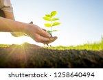 hands holding green plant  | Shutterstock . vector #1258640494