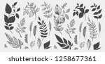 set of leaves. hand drawn... | Shutterstock .eps vector #1258677361