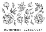 set of peonies with leaves.... | Shutterstock .eps vector #1258677367