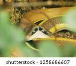 Snake With A Double Head