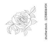 beautiful black and white rose... | Shutterstock .eps vector #1258806454