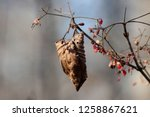 leaves during the autumn season | Shutterstock . vector #1258867621