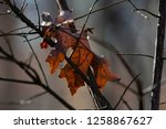 leaves during the autumn season | Shutterstock . vector #1258867627