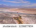 the laguna chaxa  which is also ... | Shutterstock . vector #1258877854