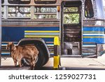 the bus park to fill the tank...   Shutterstock . vector #1259027731