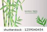 vector illustration of bamboo... | Shutterstock .eps vector #1259040454