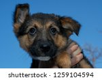 dog at the animal shelter of... | Shutterstock . vector #1259104594