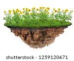 green grass and flowers island... | Shutterstock . vector #1259120671