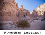 wadi watir  sinai   egypt   may ... | Shutterstock . vector #1259123014