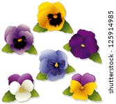 vector - Pansies and Johnny Jump Ups (Violas). Spring flowers isolated on white background. EPS8 compatible.