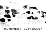 vector print texture.... | Shutterstock .eps vector #1259153017