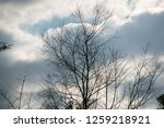 overcast cloudy in the morning. | Shutterstock . vector #1259218921