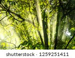 beam through the tree into the...   Shutterstock . vector #1259251411