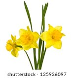 Stock photo spring flowers isolated on white background 125926097