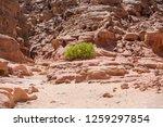 wadi watir  sinai   egypt   may ... | Shutterstock . vector #1259297854