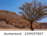 wadi watir  sinai   egypt   may ... | Shutterstock . vector #1259297857