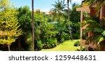 beautiful tropical garden at... | Shutterstock . vector #1259448631