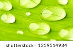 green leaf with drops of water... | Shutterstock . vector #1259514934