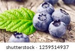 blueberries with green leaves... | Shutterstock . vector #1259514937
