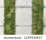 stone tiled pavement with green ... | Shutterstock . vector #1259533927