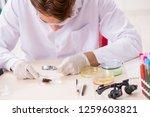 scientist entomologist studying ...   Shutterstock . vector #1259603821