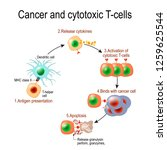 cancer and cytotoxic t cells. t ... | Shutterstock .eps vector #1259625544