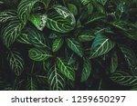 green leaves dark tone... | Shutterstock . vector #1259650297