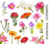 Stock photo collage of blooming flowers isolated on white background 125968391
