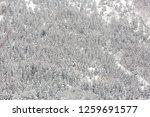 winter landscape of pine forest ... | Shutterstock . vector #1259691577