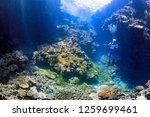 male scuba diver with camera in ...   Shutterstock . vector #1259699461
