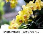 orchids in the garden. | Shutterstock . vector #1259701717