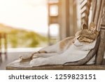 young cat sleep on a chair in... | Shutterstock . vector #1259823151