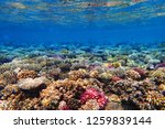 coral reef in egypt as nice... | Shutterstock . vector #1259839144