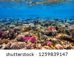 coral reef in egypt as nice... | Shutterstock . vector #1259839147