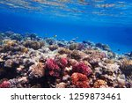coral reef in egypt as nice... | Shutterstock . vector #1259873461