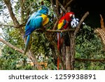 macaws sitting on a branch | Shutterstock . vector #1259938891
