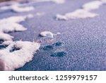 frozen soap bubble | Shutterstock . vector #1259979157