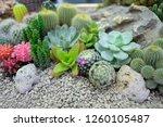 Beautiful Colorful Cactus...