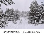 ski trail in snowy forest | Shutterstock . vector #1260113737