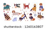 collection of cute dogs of... | Shutterstock .eps vector #1260163807