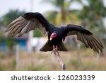 Close Up Of A Turkey Vulture ...