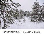 ski trail in snowy forest | Shutterstock . vector #1260491131