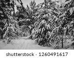 ski trail in snowy forest | Shutterstock . vector #1260491617