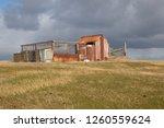 pebble island   falkland... | Shutterstock . vector #1260559624