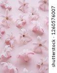 hyacinth pink surprise dutch...   Shutterstock . vector #1260576007