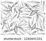 tropical fruits  illustration... | Shutterstock .eps vector #1260641101